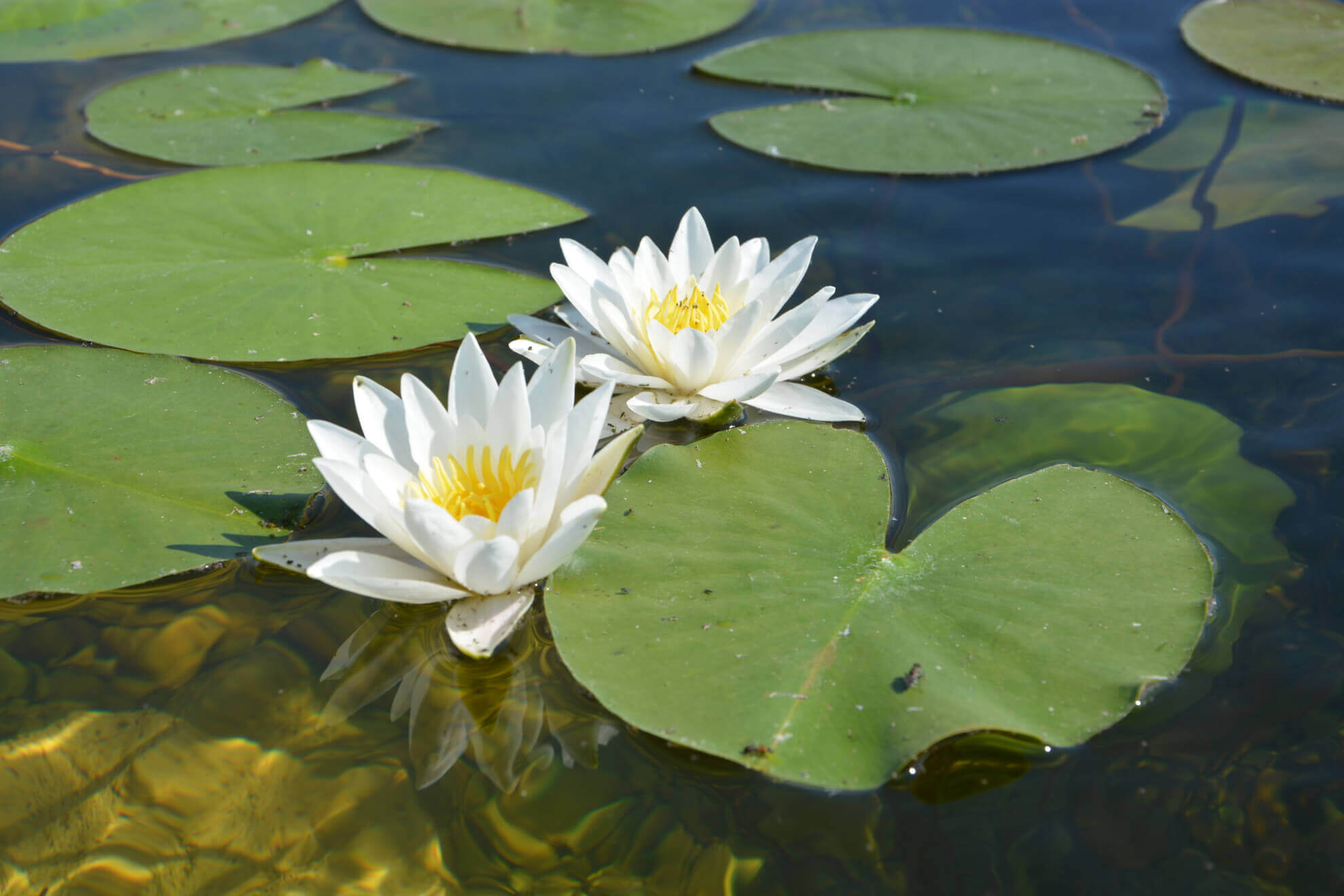Lily Pond Eminence Certified Organic Farm